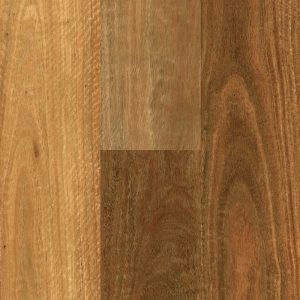 Southern_Spotted_Gum_Swatch_1000px