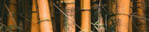 Why bamboo flooring