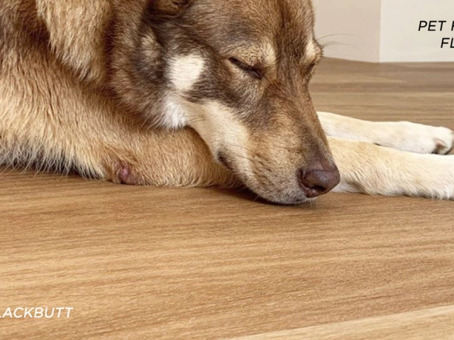 Rigid Plank Pet Friendly Floors Slider
